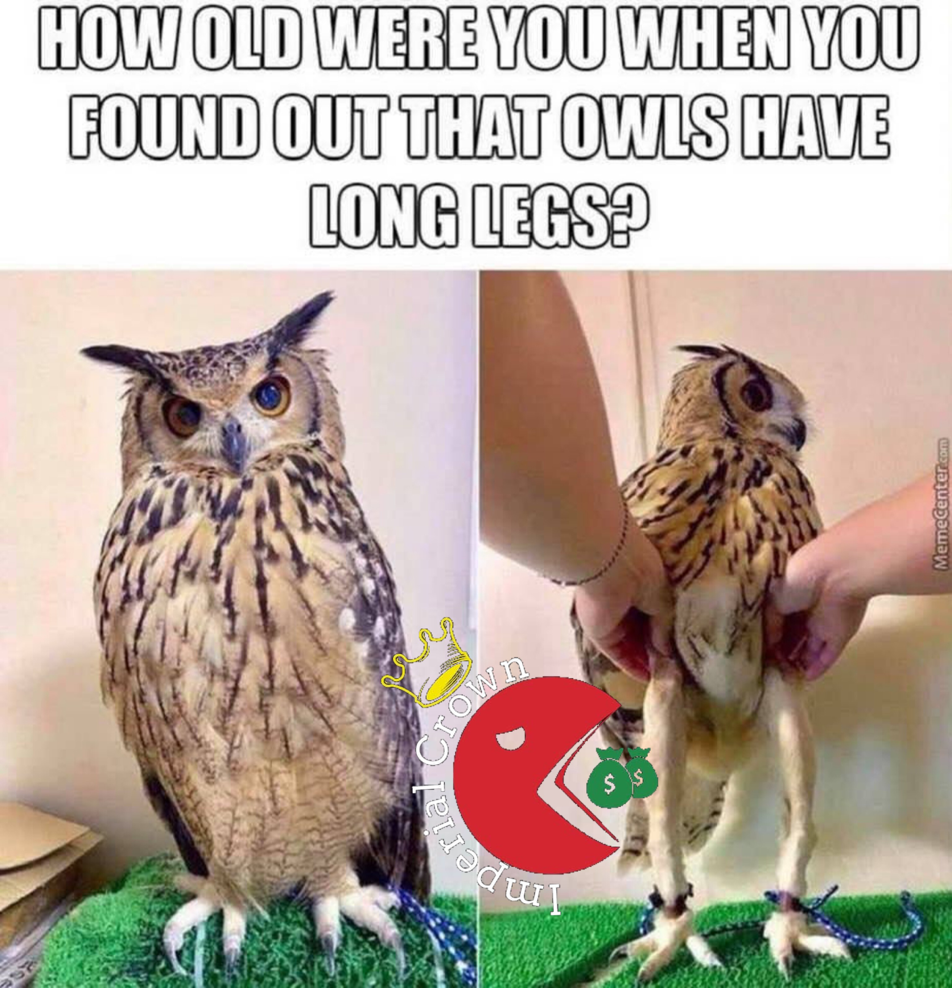 How old were you when you found out that owls have long legs