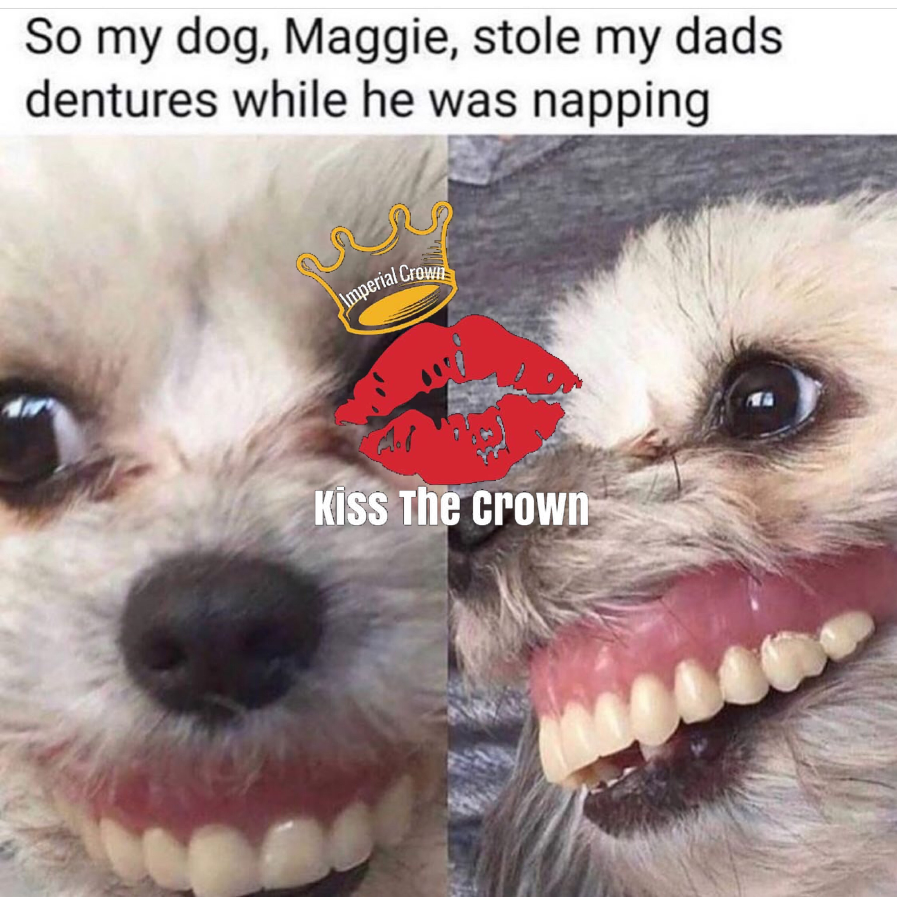 So my dog maggie stole my dads dentures while he was napping
