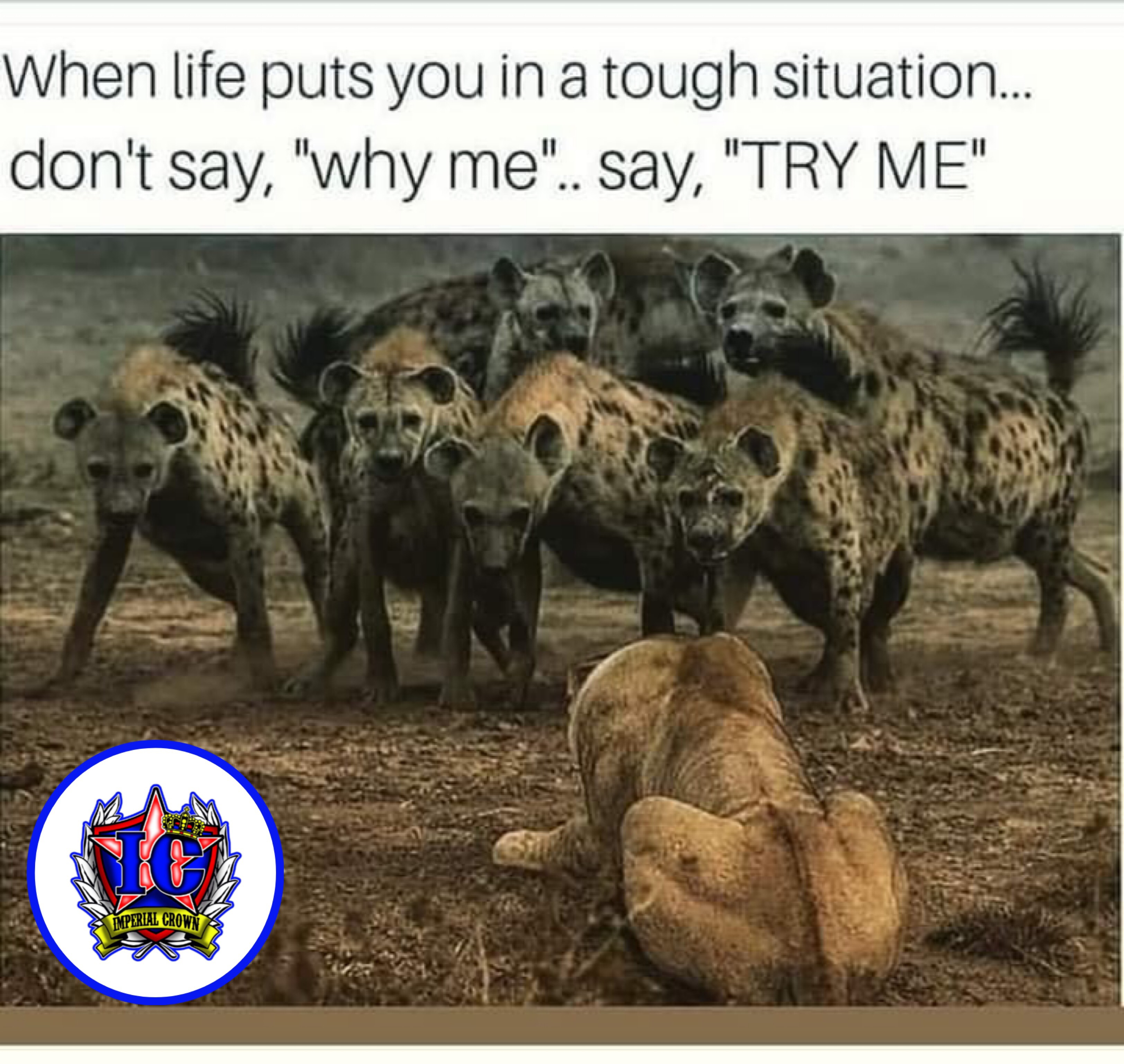 When life puts you in a tough situation don't say why me say try me