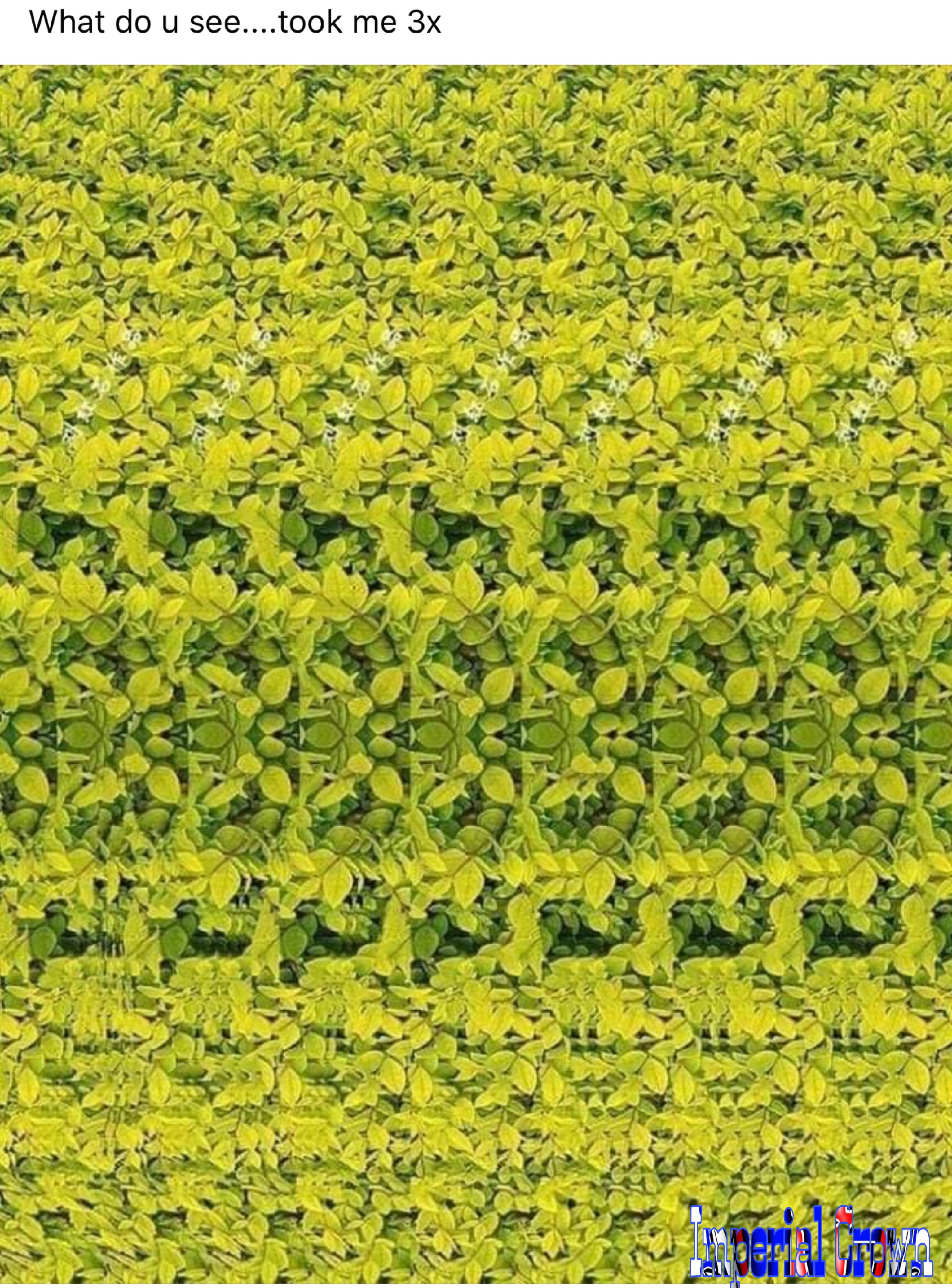 What do you see took me 3x